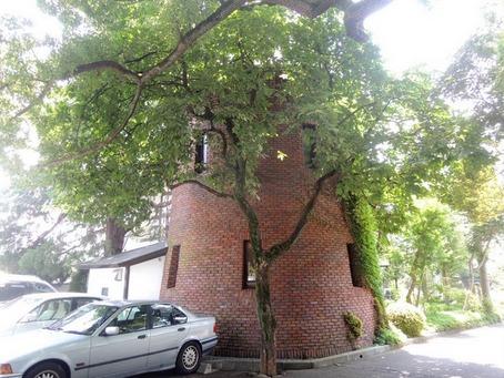 くすの樹4