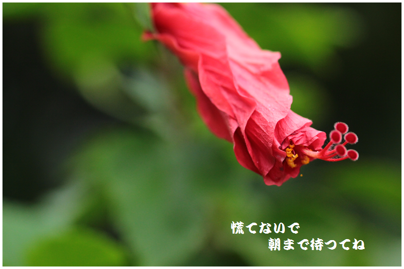 IMG_0071_R.png