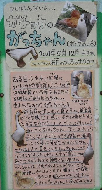 王子動物園_16