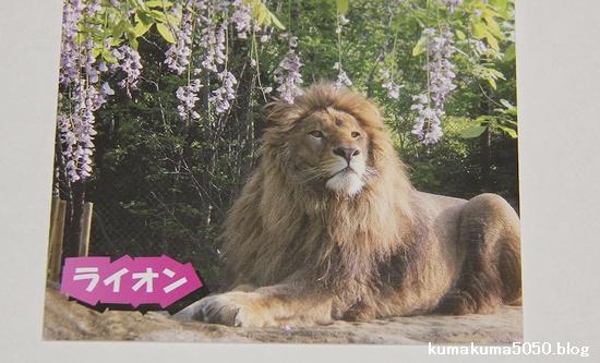 とくしま動物園_20