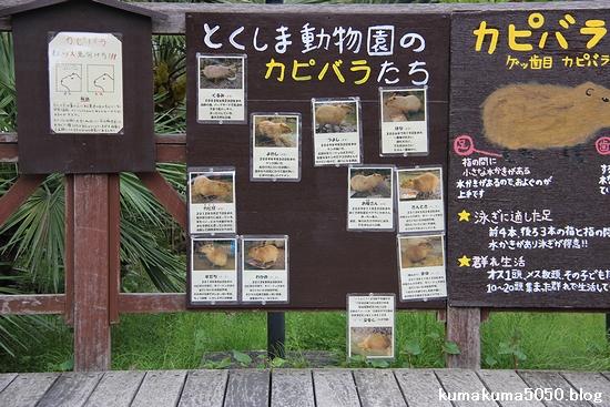 とくしま動物園_25