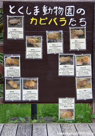 とくしま動物園_27