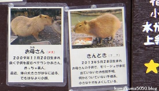 とくしま動物園_30