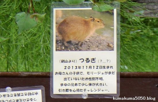 とくしま動物園_32