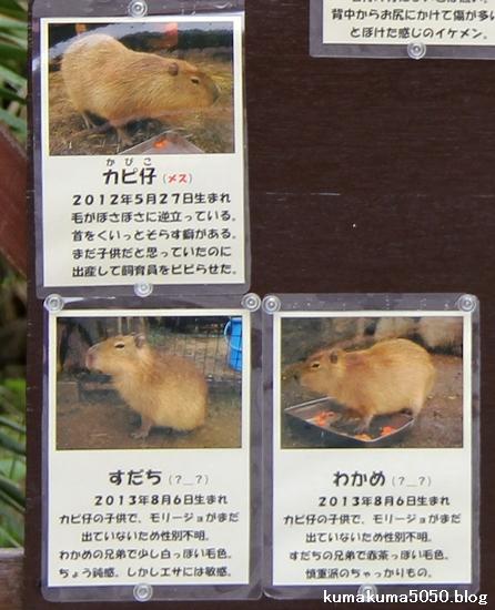 とくしま動物園_33