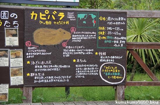 とくしま動物園_34