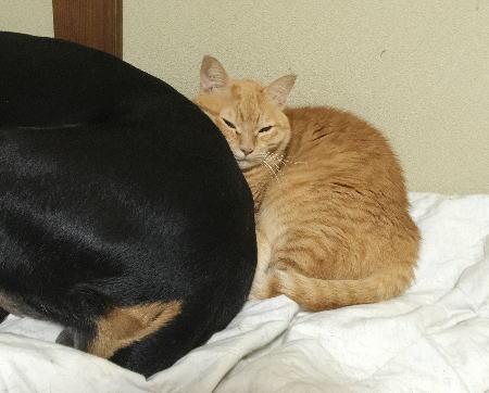 猫 cat チャト.jpg