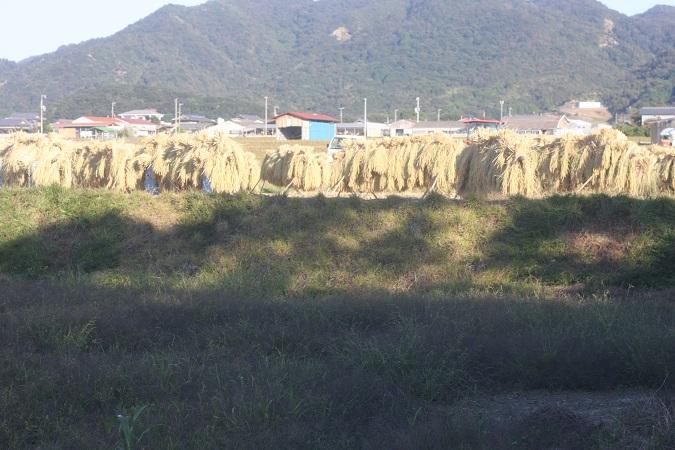 151014uranomusume.jpg