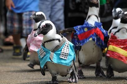 ペンギンさんのお散歩