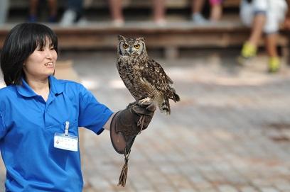 フクロウの飛行ショー