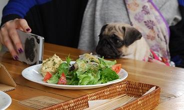 サラダとしずくちゃん