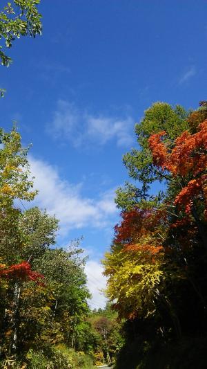 御岳ロープウェイの紅葉です2