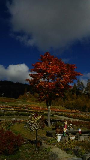 御岳ロープウェイの紅葉です
