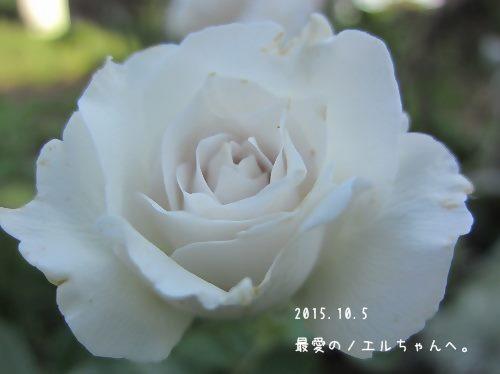 IMG_0001 2014 7 (1306)