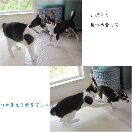catst