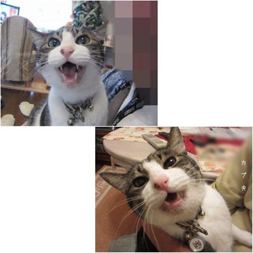 catsもんく