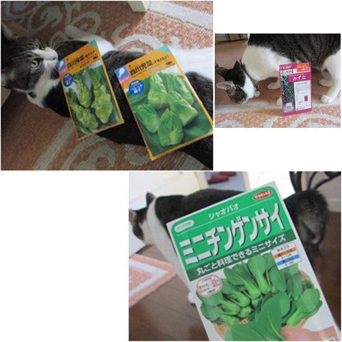 cats1_2015090515091779e.jpg