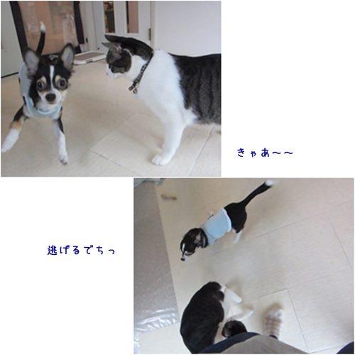 cats1_20151006204200647.jpg