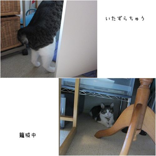 cats1_20151017192203621.jpg