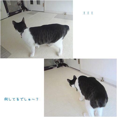 cats5_20150824200000979.jpg