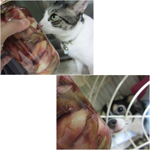 cats5_20151006202512d20.jpg