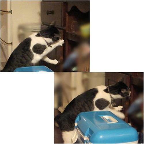 cats_20150916174216f16.jpg