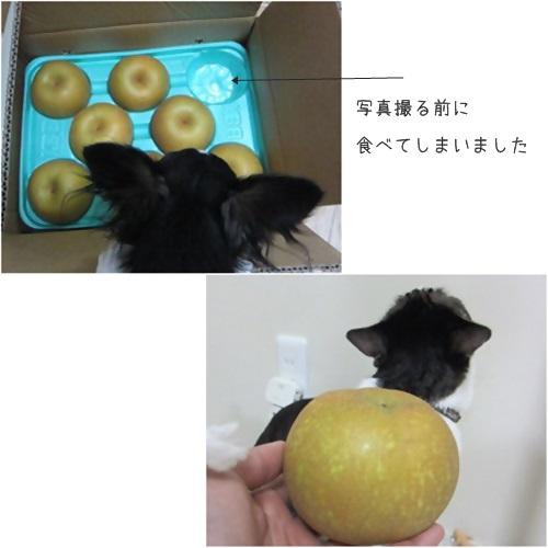 cats_20150925165134e93.jpg