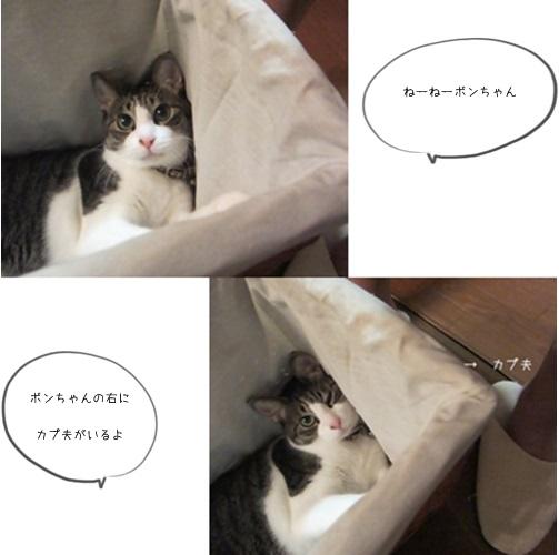cats_20151013155753f3d.jpg