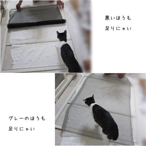 cats_201510171922023ac.jpg