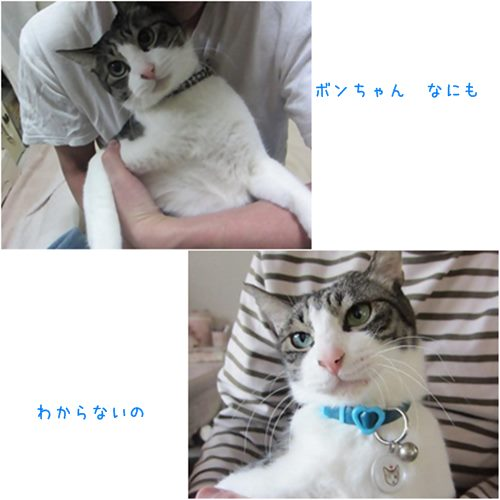 cats_20151017202828bc2.jpg