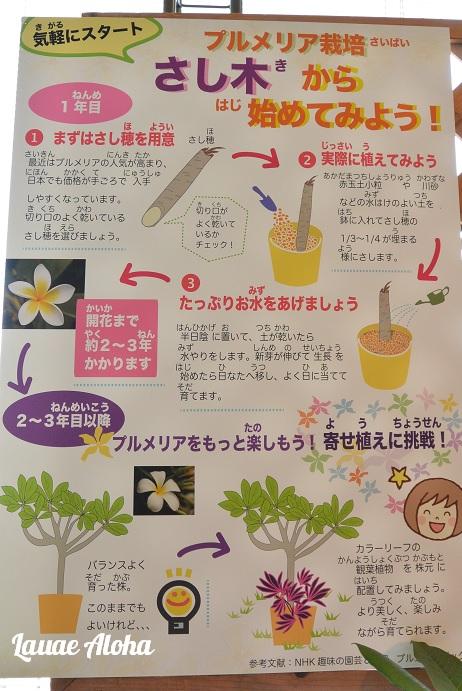 さし木の方法