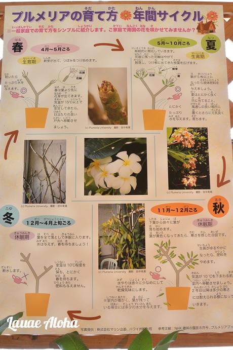 栽培の年間サイクル