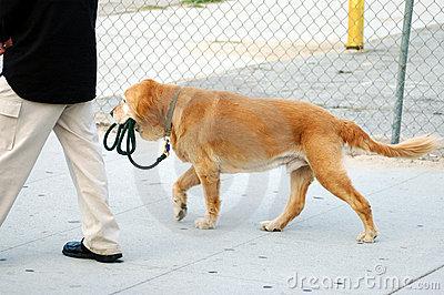 independent-dog-41202.jpg