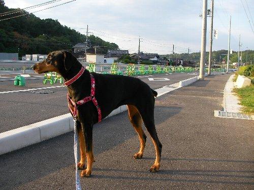 201509150635早朝散歩⑫-1