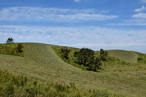 271003 牧草刈り2