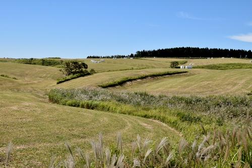 271003 牧草刈り3