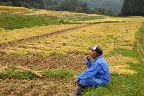 271010 稲刈り3