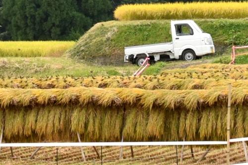 271010 稲刈り10