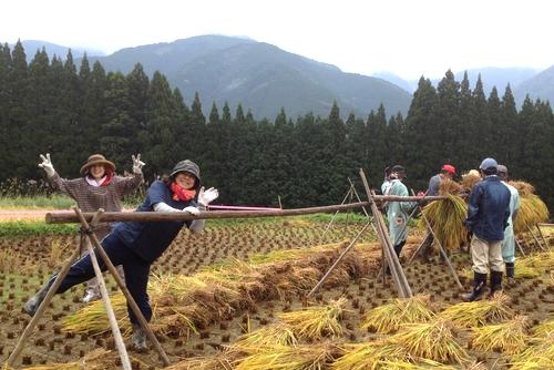 271011 稲刈り3