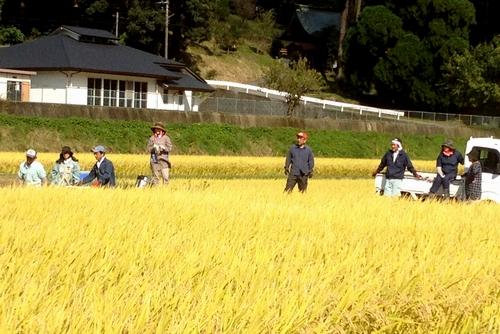 271011 稲刈り6