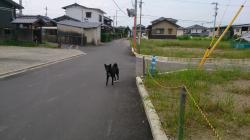 自由犬 クロちゃん