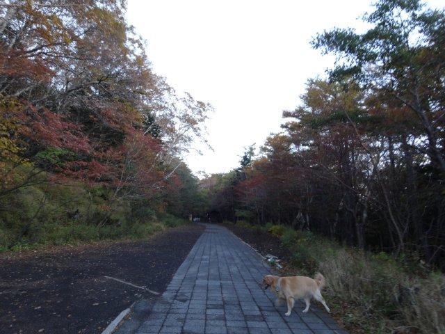 富士山 須走口 犬登山 2015-10-16 006