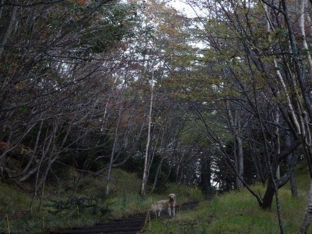 富士山 須走口 犬登山 2015-10-16 010