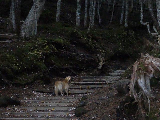 富士山 須走口 犬登山 2015-10-16 013