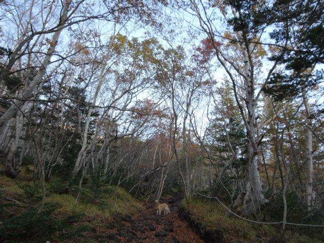 富士山 須走口 犬登山 2015-10-16 026