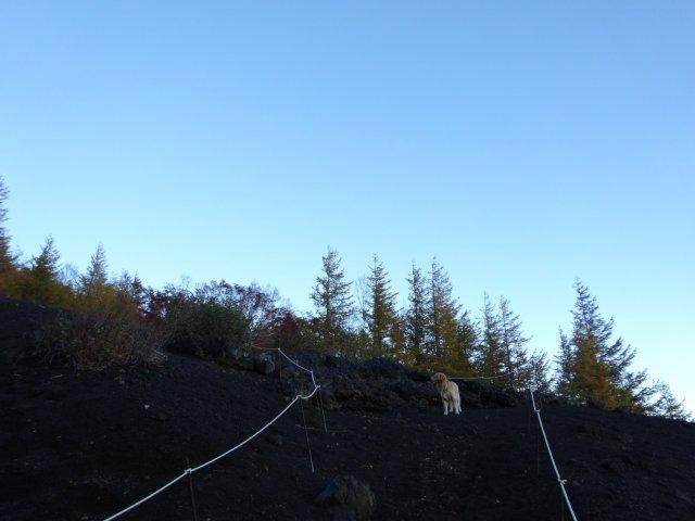 富士山 須走口 犬登山 2015-10-16 032