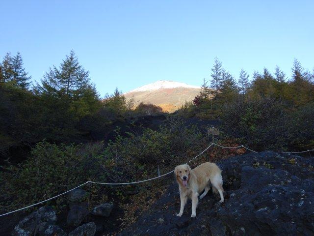 富士山 須走口 犬登山 2015-10-16 035