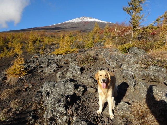 富士山 須走口 犬登山 2015-10-16 052