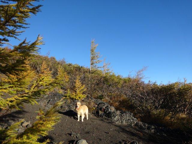 富士山 須走口 犬登山 2015-10-16 058