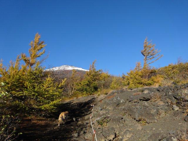 富士山 須走口 犬登山 2015-10-16 059